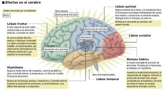 Qué pasa en mi cerebro cuando fluyo